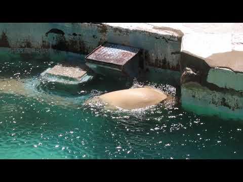 2 11 Aug 2021 Shilka and Hochan at Tennoji zoo Osaka Japan