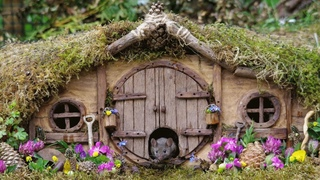 Man builds an entire village for mouse he saw in his garden