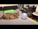 шлёпа лопает шарики