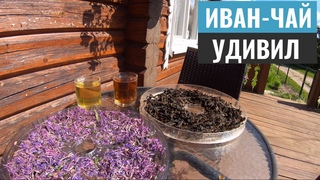 Иван чай - такого эффекта я не ожидал. Ферментация, эффект и полезные свойства копорского чая