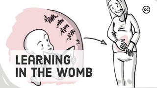 Prenatal Development: What Babies Learn in the Womb