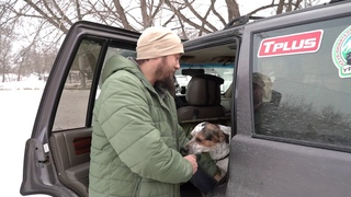 Автомобильный гамак для перевозки животных. Владельцам собак смотреть обязательно!!!