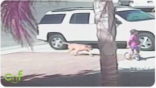 Hero Cat Saves Toddler From Dog Attack | INSANE footage