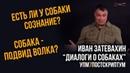 Иван Затевахин. Диалоги о собаках на канале Лаборатория Научных Видео. Серия №1