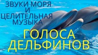 Голоса Дельфинов, Китов и Звуки моря. Исцеляющая музыка/Дельфинотерапия. Лечение стрессов, депрессий