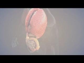euronews hi-tech - Du tissu musculaire fabriqué par une imprimante 3D