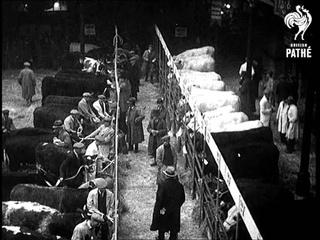 Fine Fat Cattle (1933)