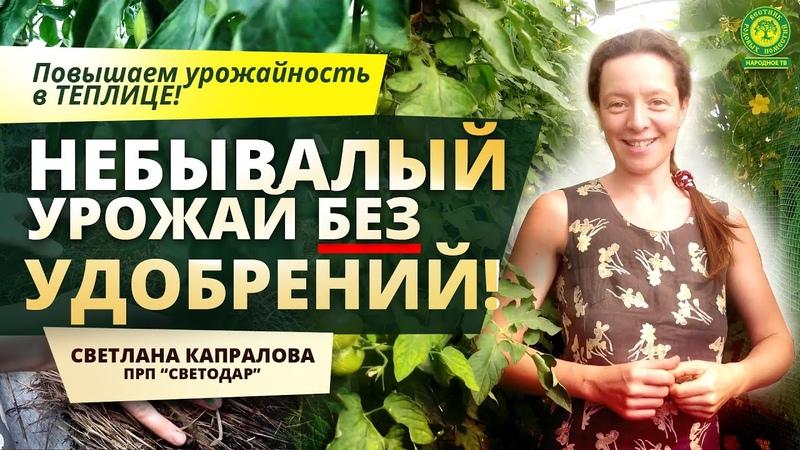 НЕБЫВАЛЫЙ урожай без удобрений Поселение Светодар Светлана Капралова Вестник РП