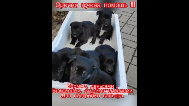 Видео от Ольги Дударь