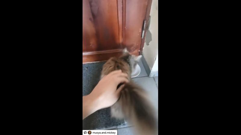 Видео от Леси Шпротовой