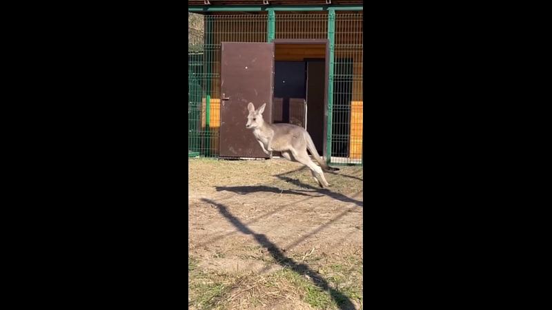 Видео от Ростовский на Дону зоопарк