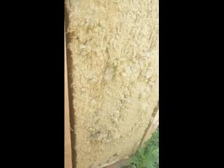 Video by «Приют человека» - помощь людям. ПРОЕКТ АНО ЦРА