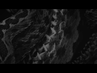 Moanhand - Nightwings (Visualizer) Track Preview