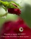 Шеина Светлана | Киров | 3