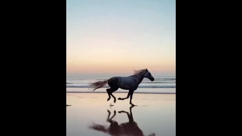 Жеребец на пляже
