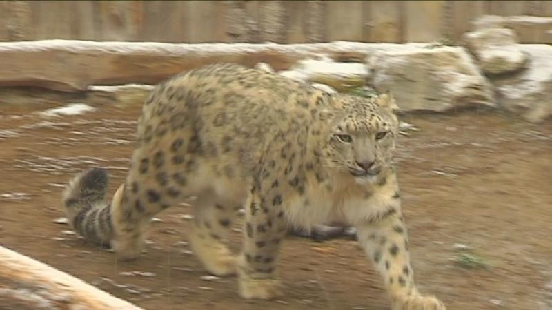 Животных Пермского зоопарка не отдадут в другие города