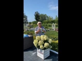 Видео от Садовый центр Веры Глуховой Гортензии