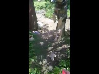 Video by Zhanna Kokorina