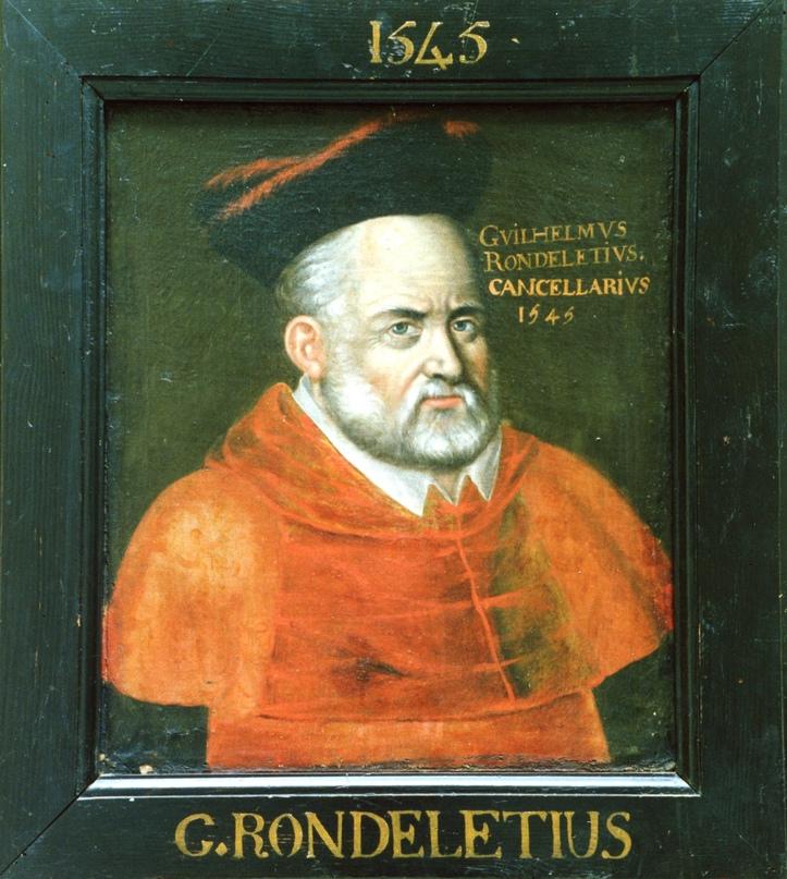 Портрет Ронделе в здании медицинского факультета Монпелье. Он находится среди множества других портретов профессоров, в разное время занимавших знаменитую на всю Европу кафедру.