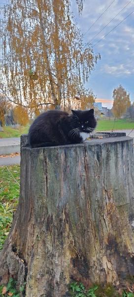 в сквере у молодёжного центра бегает кошка, чёрный...