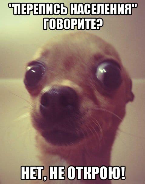 В Краснодарском крае заработали более 1700 участков для проведения всероссийской переписи населения  Пройти Всероссийскую перепись населения... [читать продолжение]