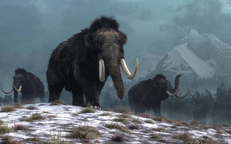 Ученые выяснили, почему вымерли мамонты в Сибири