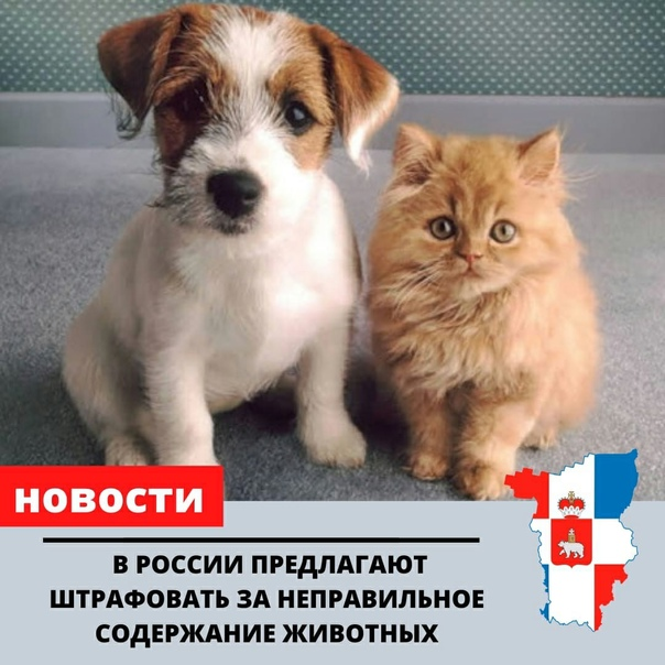 В России предлагают штрафовать за неправильное сод...