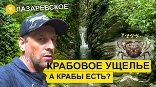 Влог #68. Лазаревское 2020: прогулка по Крабовому ущелью