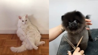 Funny Animal Videos Will Make Your Day Positive - Cutest Animals 2021